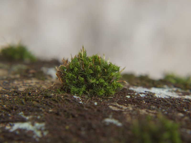 un buisson miniature