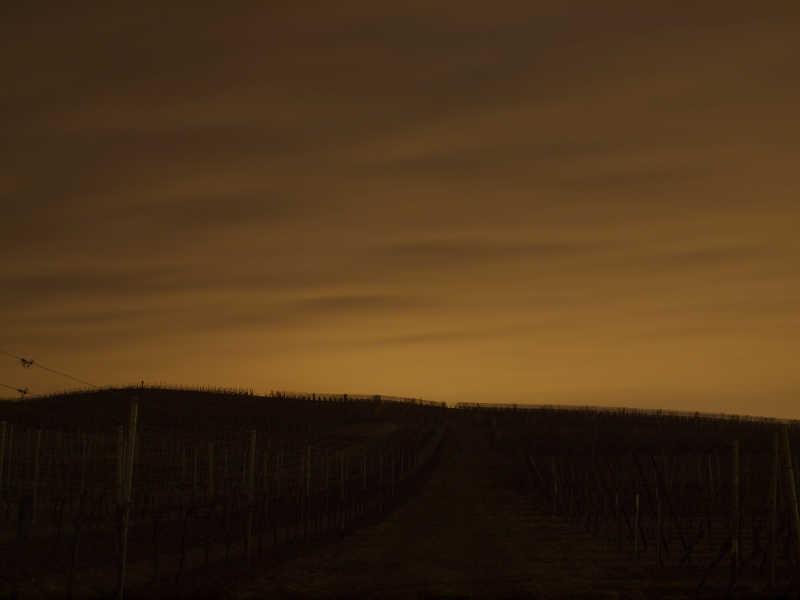Les vignes de nuit