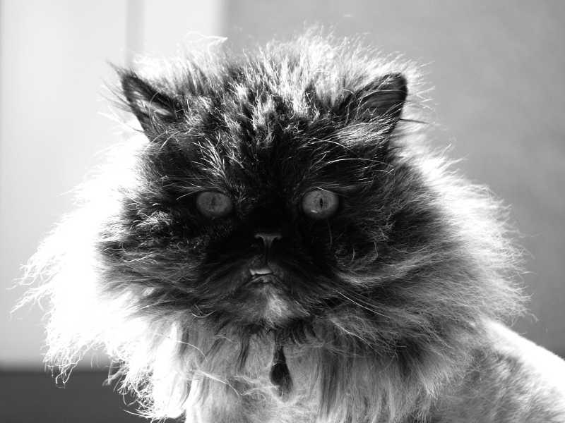 Mon chat Rustine en N&B