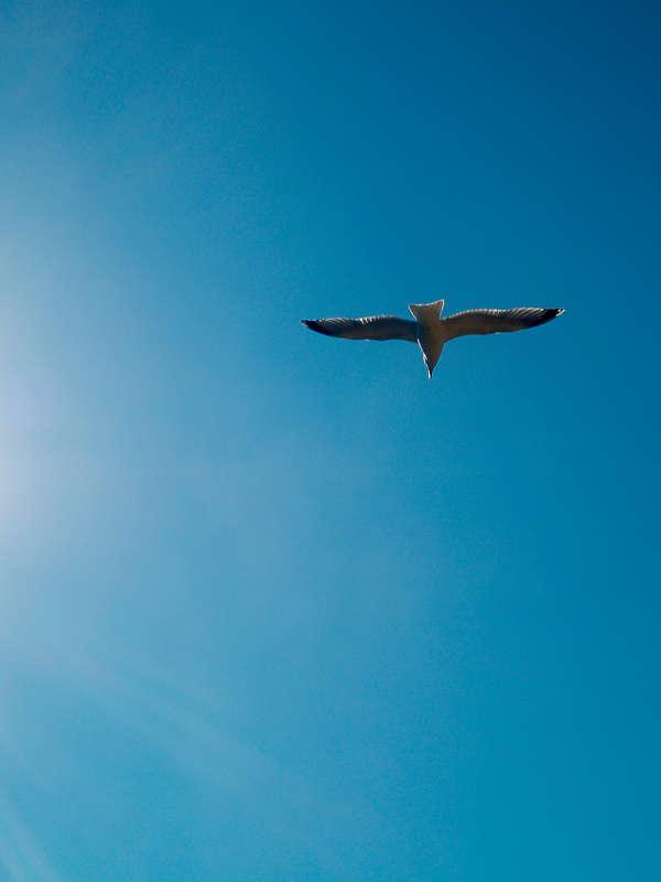 Le goéland sous le ciel bleu