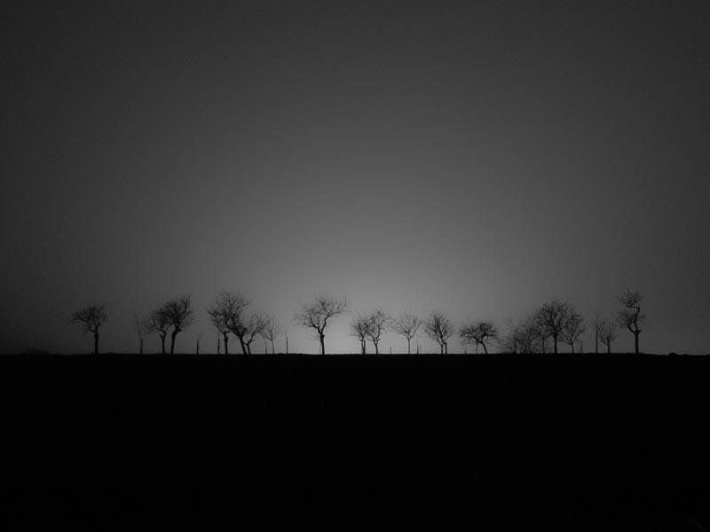 Des arbres en ombres chinoises
