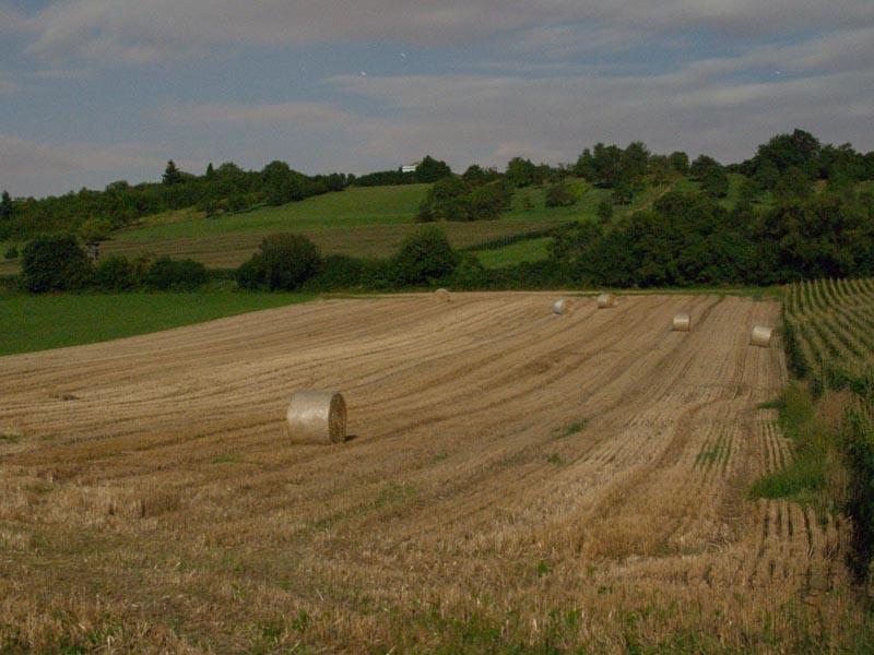 Le champ de blé moissoné de nuit