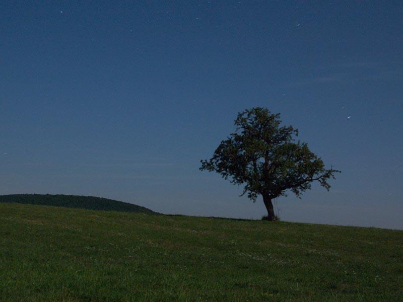 Un arbre au milieu d'un champ