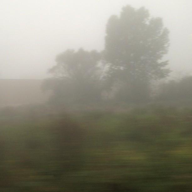 [Instagram] Il y a encore beaucoup de brouillard ce matin #alsace #train