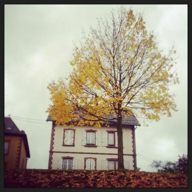 [Instagram] Un arbre jaune.