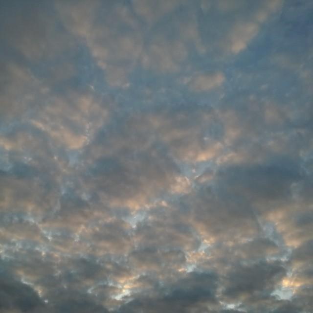 [Instagram] Le ciel de ce matin #panthère #sky