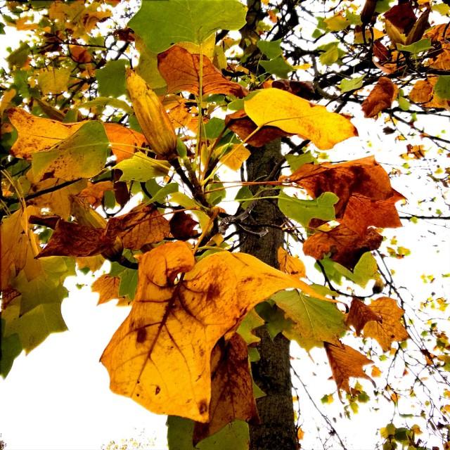 [Instagram] J'aime l'automne.