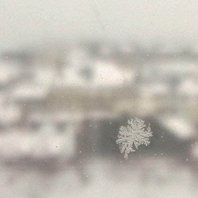 [Instagram] Il neige à Strasbourg.