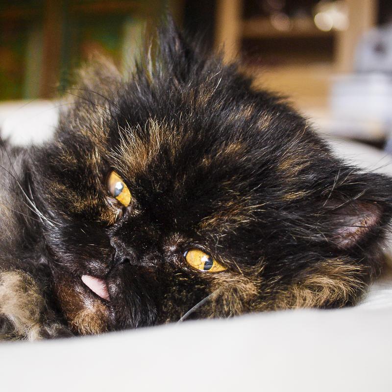 Rustine mon chat