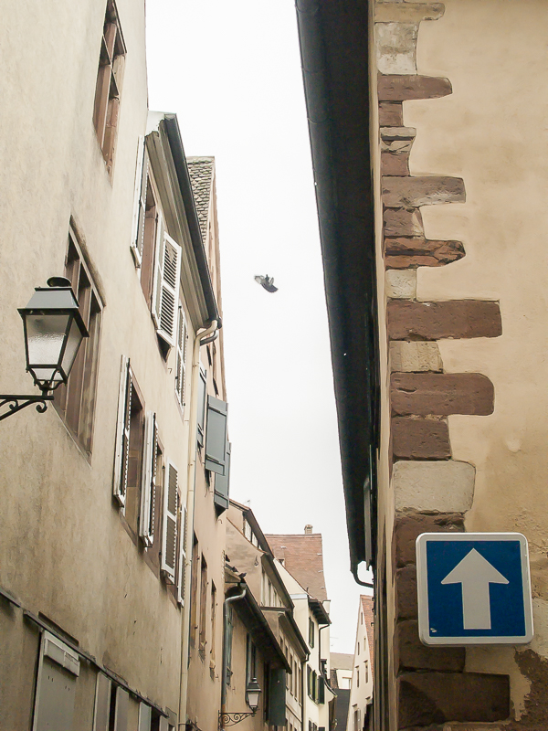 Le Pigeon dans la ruelle