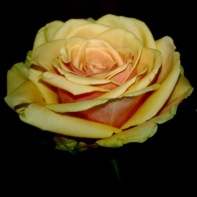 [Instagram] Une rose pour Deborah. #iloveyou