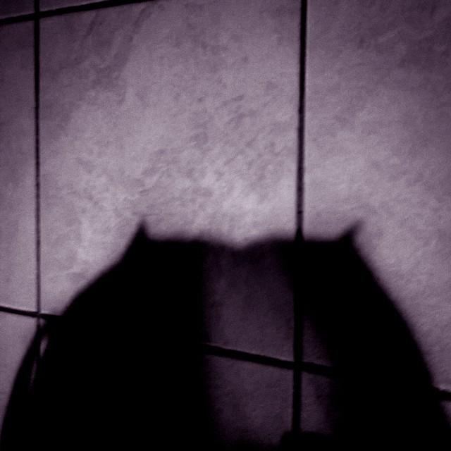 [Instagram] Une ombre mystérieuse dans ma cuisine ... #Gpeur