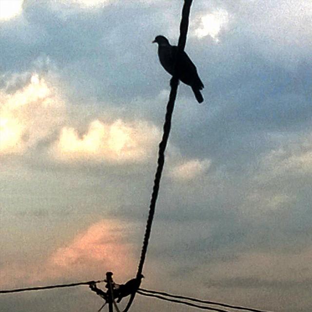 [Instagram] Y a des pigeons sur la ligne.