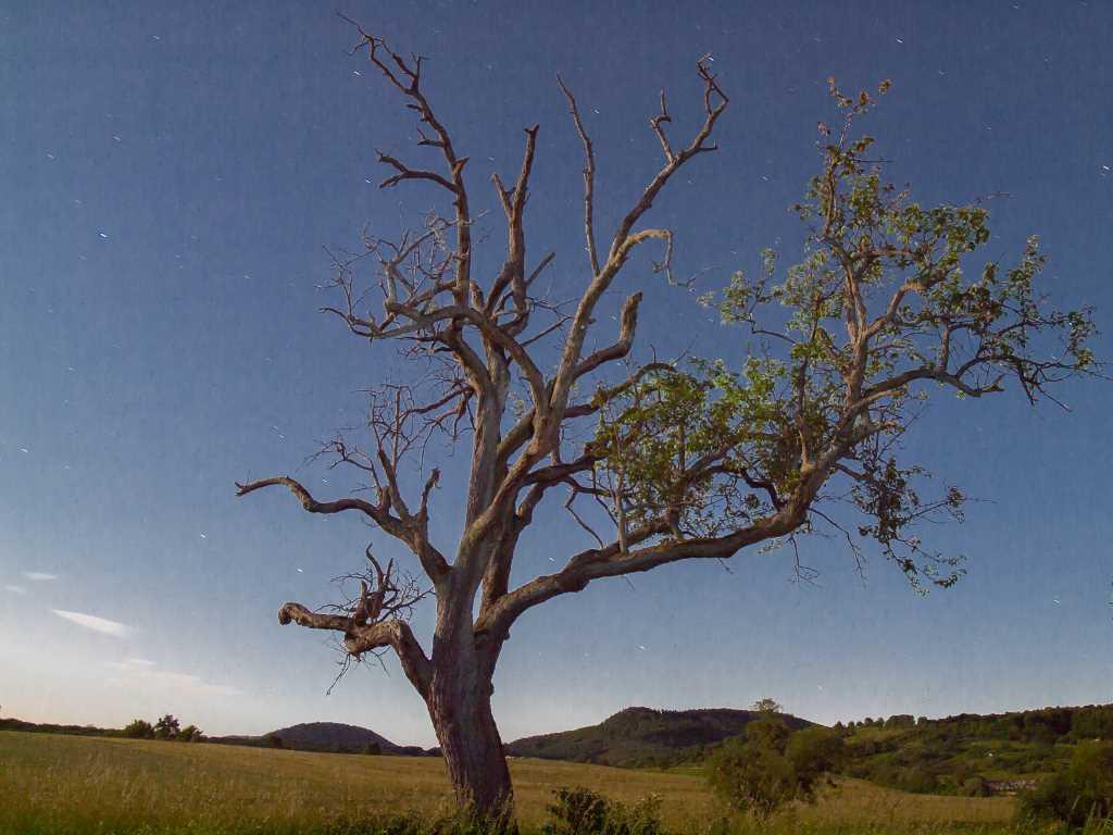 L'arbre en lumière naturelle