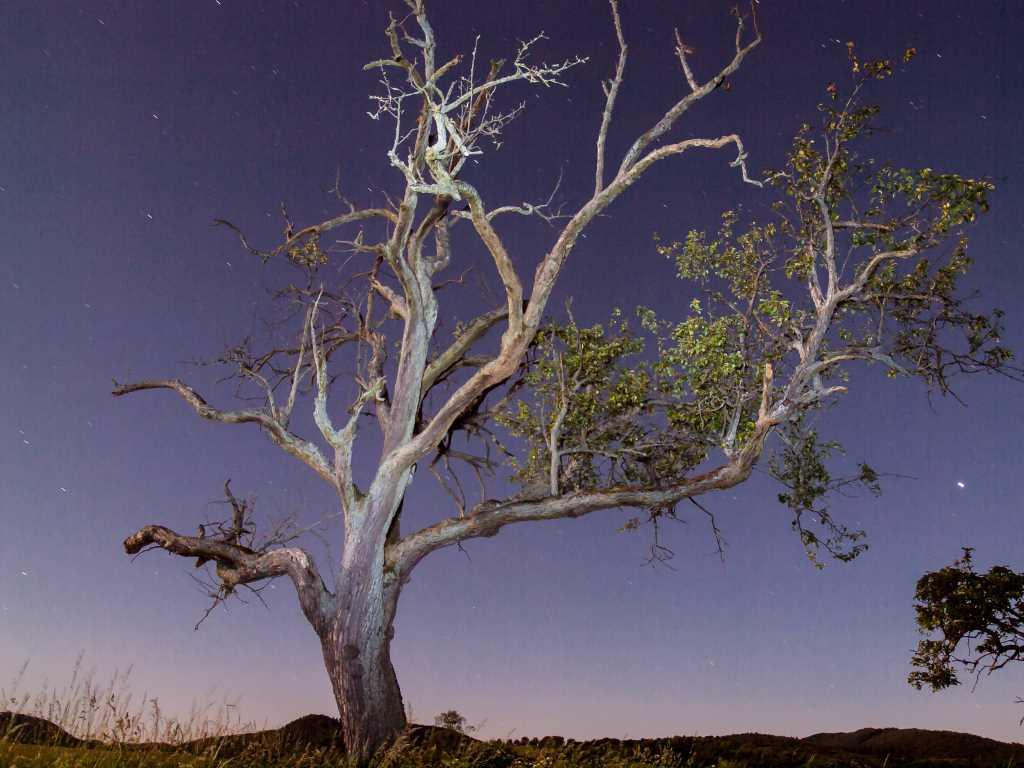 L'arbre balayé par la lumière