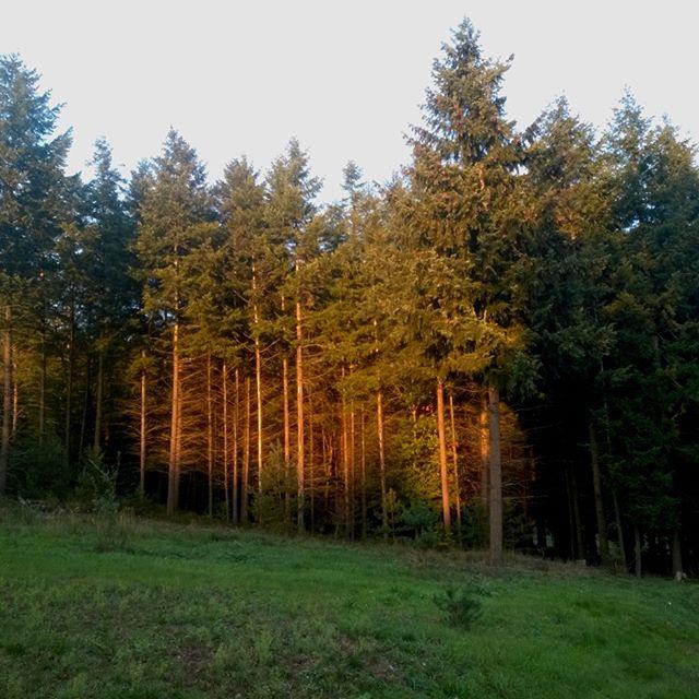 [Instagram] Couché de soleil sur la forêt