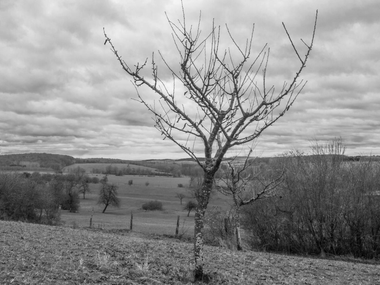 L'arbre en haut de la colline