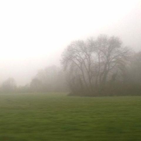 [Instagram] Un peu de Brocéliande en Alsace : Une faille spatio-temporelle !